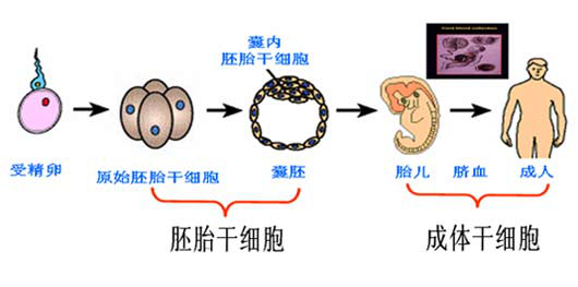 动物细胞结构简图手绘
